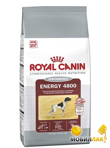Royal canin coon
