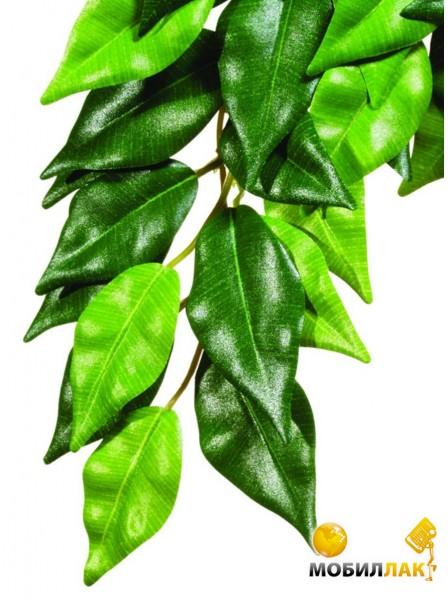 hagen Hagen Ficus среднее