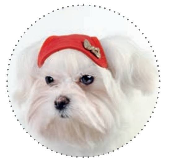 Кепка для собаки Pet Fashion летняя М